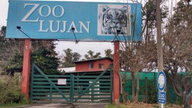Photo of El Ministerio de Ambiente cerró el zoológico de Luján